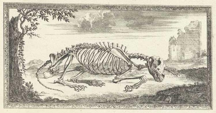 002bonesskeletons2.jpg