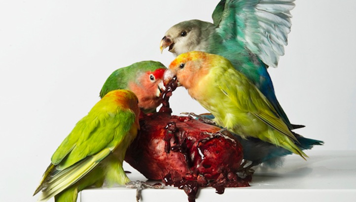 Exquisite Corpses: Polly Morgan's sculptural taxidermy