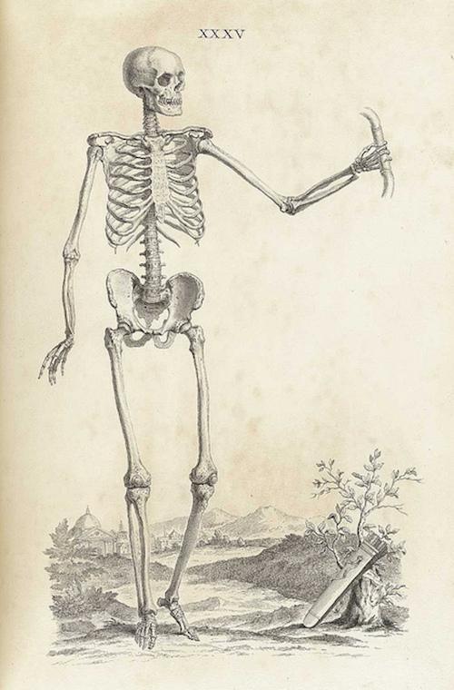 014bonesskeleton14.jpg