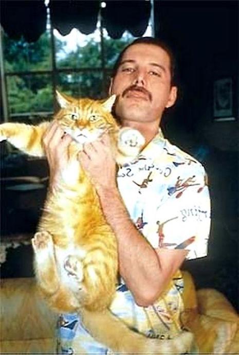 01fmcats.jpg