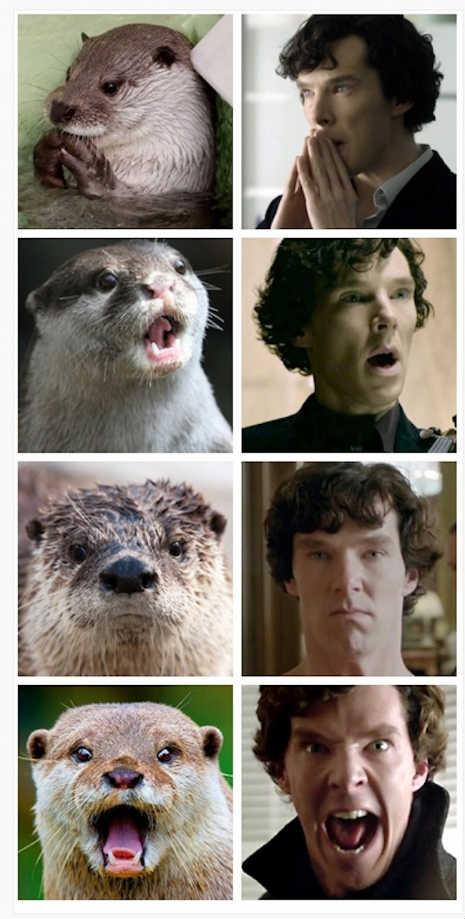 otters_benedict_cumberbatch