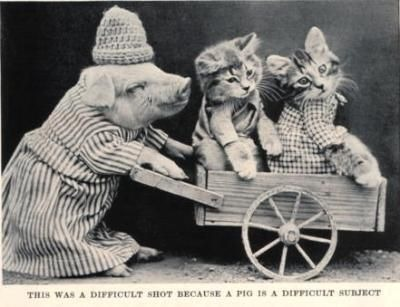 Macabre Edwardian LOLcats featuring dead animals