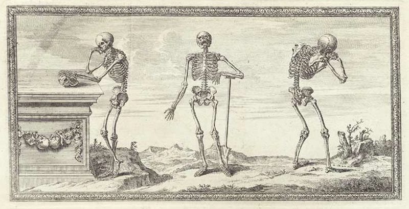 Skeletal remains: The first accurate representation of 'The Anatomy of Bones' from 1733