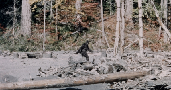 Is there anyone left who still believes the 1967 'Bigfoot' film footage is real?
