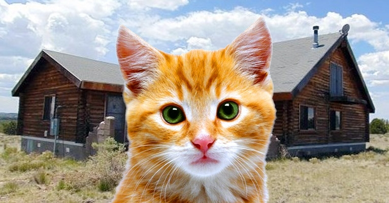 Home for sale in Arizona is move-in ready IF YOU'RE A CRAZY CAT PERSON
