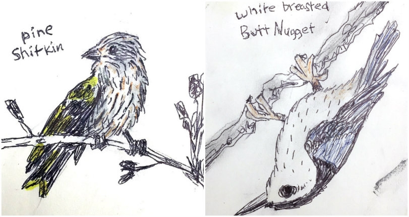 Hilarious Tumblr dedicated to the 'Dumb Birds of North America'