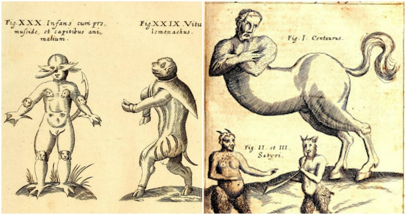 Monsters and monstrosities: The marvels and wonders of the 'Physica Curiosa,' 1662
