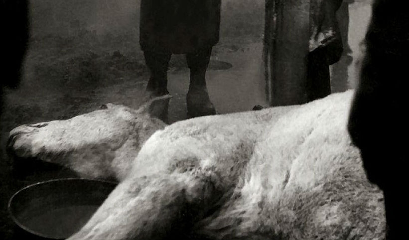 Abattoir Blues: In 'Blood of the Beasts' death has a cruel beauty