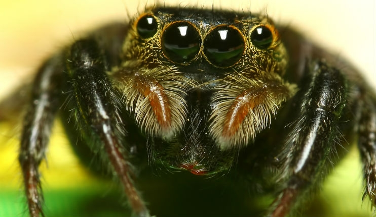 The world's spider population could eat every human being in a year