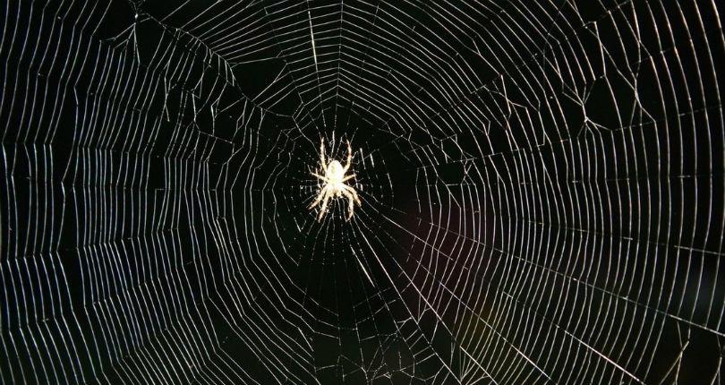 Spiders 'tune' their webs, just like guitar strings