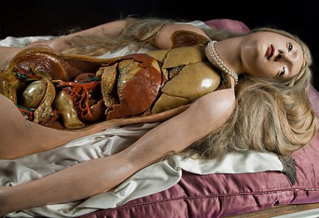Anatomical Venus: The gory idealized beauty of wax medical models