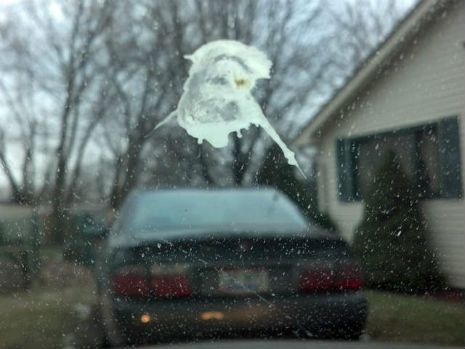 Holy Shit: Ohio man sees face of Jesus in bird droppings