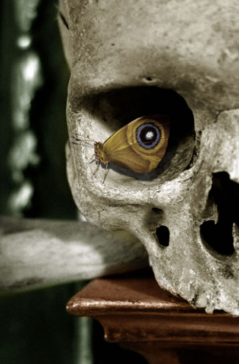 Butterfly inside the eye socket of a human skull