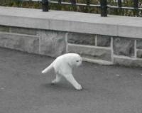 New Cat Species: Found on Google Street View?
