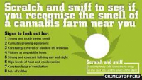 Crime fighting charity release Scratch 'n' Sniff Cannabis Cards
