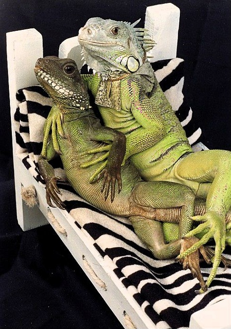 Lizard lovers