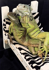 Lizard Love: Get sensual with the classy films of Henry Lizardlover
