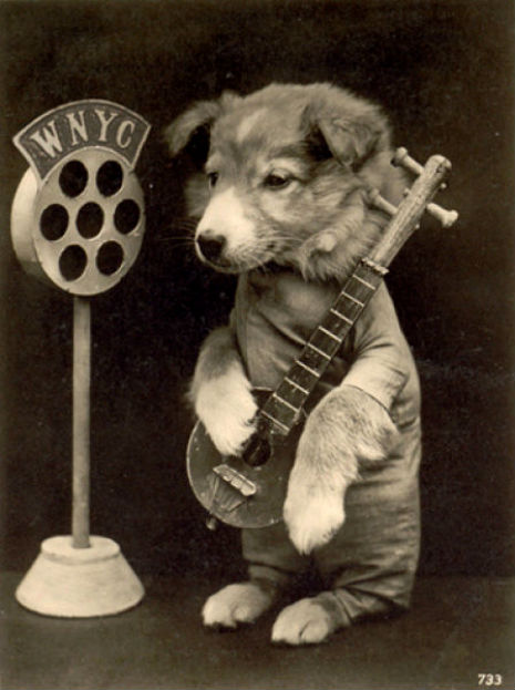Guaranteed to make you feel good: Dogs playing some bluegrass music