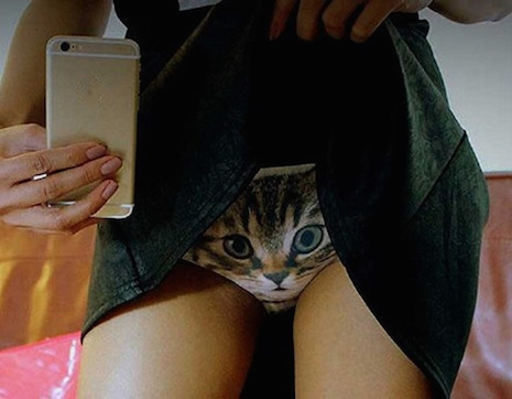 3-D cat panty flasher