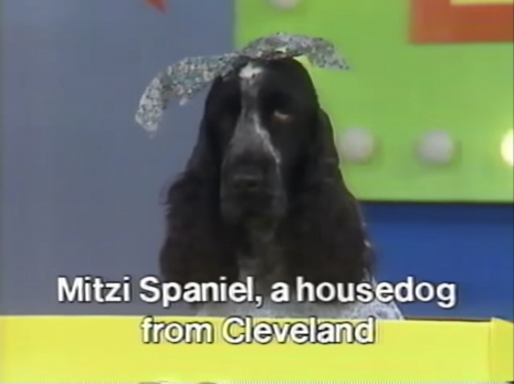 Arf!': The video variety show made for dogs | Dangerous Minds