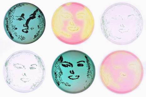Divine Pop Art made with bacteria