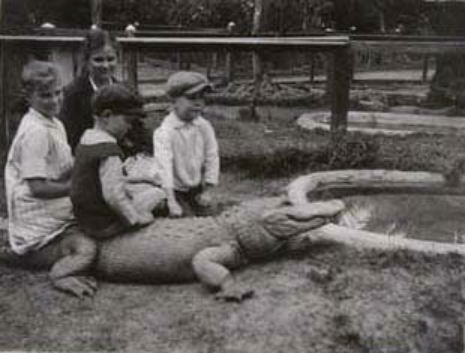 What could possibly go wrong?: Photos of children riding alligators