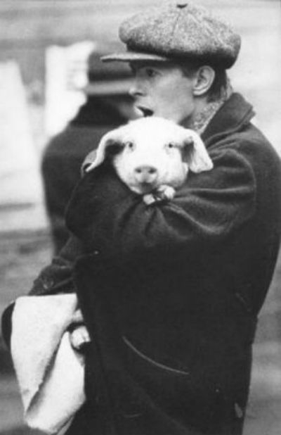 David Bowie holding a cute pink pig on the set of 'Just A