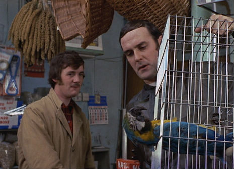 Monty Python: The true story behind the 'Dead Parrot Sketch'
