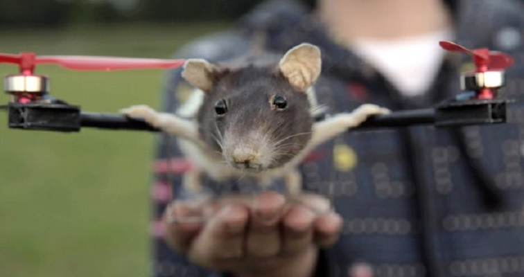 Adorable/creepy child converts his dead rat into into an adorable/creepy 'ratcopter'