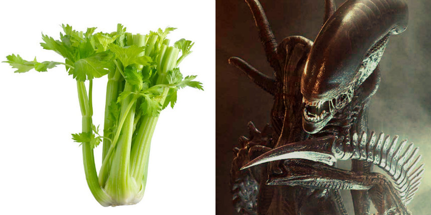 Listen to celery being used by Hollywood sound designers to make that disgusting flesh-ripping sound