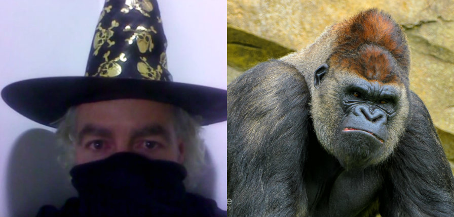 Self-proclaimed 'Wizard' banned from zoo for enraging gorillas, gets shamed by another Wizard