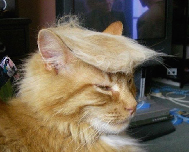 Trump your cat: The Internet takes on Donald Trump's hair and WINS!