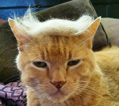 Trump your Cat