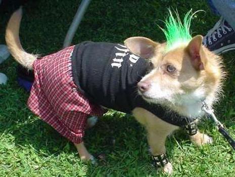 Mascotas punk :3